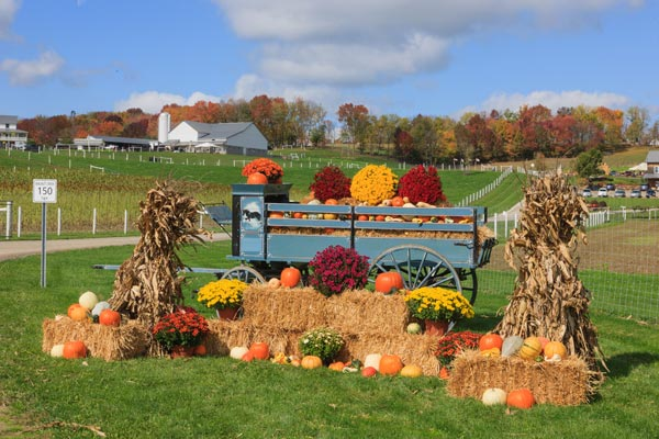 Fall festival in amish country the farm at walnut creek for Art and craft shows in ohio