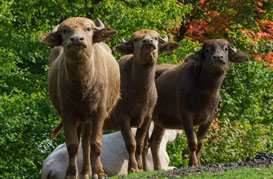 The Farm at Walnut Creek is a working farm, feed our exotic animals on a wagon ride, and tour our Amish barn and house