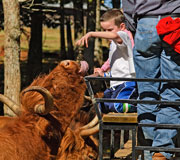Download this picture 'Lunchtime' at The Farm at Walnut Creek