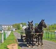 Download this horse picture 'Heading Out' at The Farm at Walnut Creek