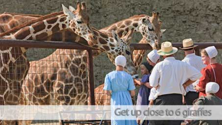 Be up close to feed our giraffes
