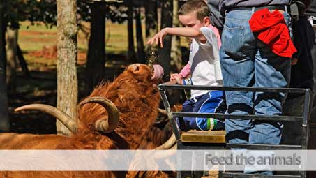 Feed exotic nimals on a wagon ride, and tour our Amish barn and house