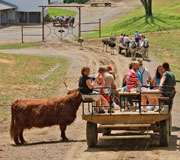 Download this picture 'Wagon Rides' at The Farm at Walnut Creek