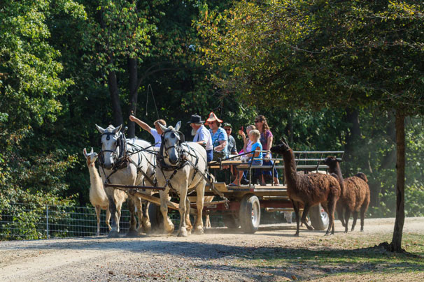 Kids and family Feeding the Animals from a horse drawn wagon